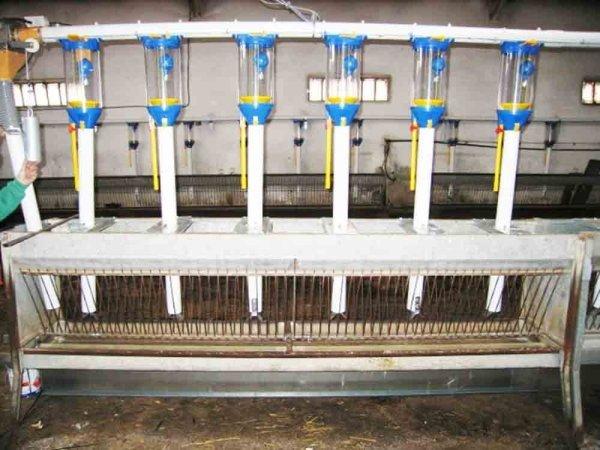 Sistema de dosificadores para ganado ovino en explotación ganadera
