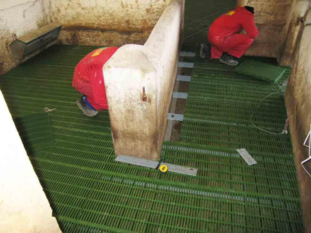 Montaje de sistema de suelos para ovino con rejillas de plástico tipo slats verdes.