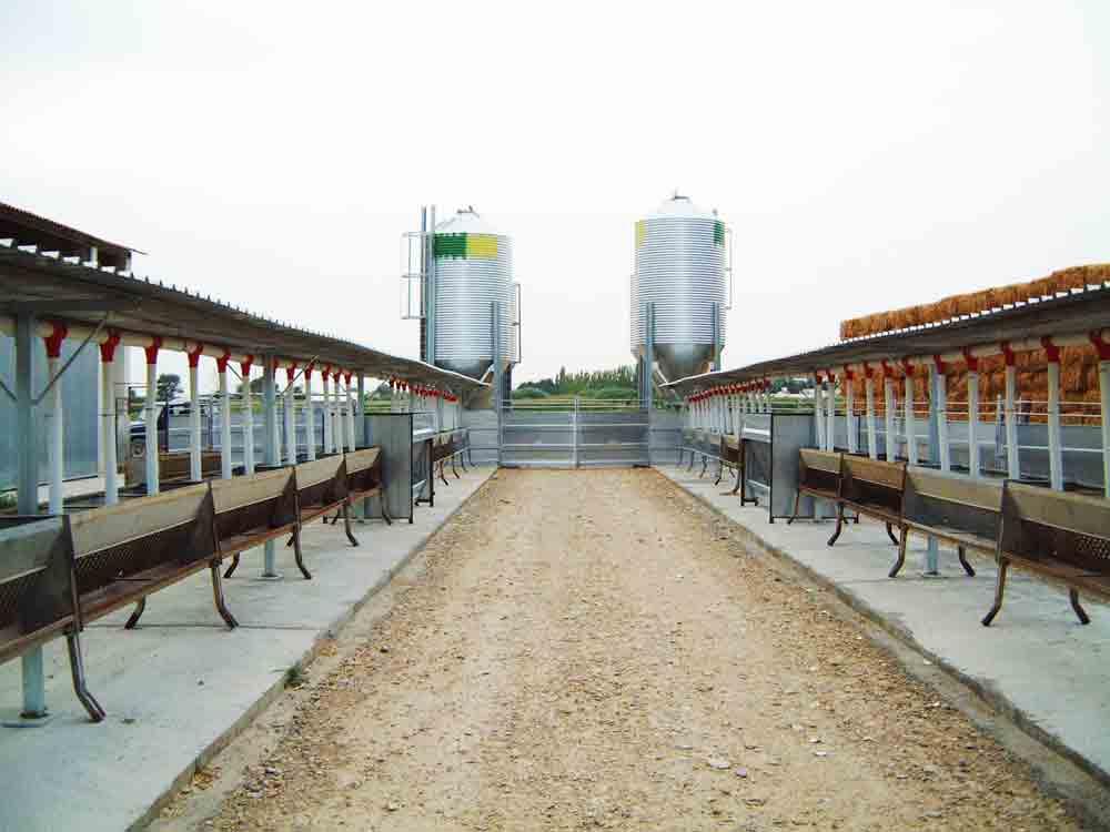silos y reparto automatico en exterior de nave de ovejas