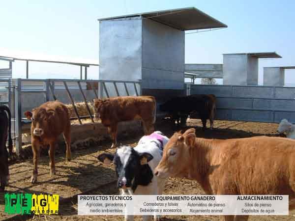 Construcción de granjas llaves mano para explotaciones engorde vacuno y naves para hembras nodrizas
