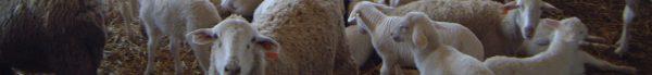 Equipamiento ganadero para ovejas y corderos