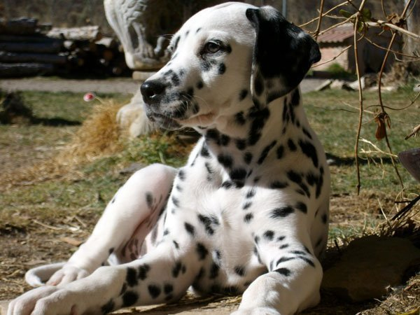 perro-mascota_w