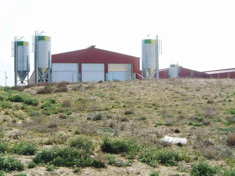 Construcción de explotación ovina para reproducción.