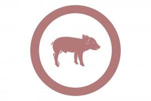 Nave de transición de lechones destetados, especializada en la construcción de granjas de cerdos, cebadero porcino y naves de cerdas hembras para reproducción de lechones Disponemos de un servicio que ofrece máxima cobertura al sector porcino, en las naves de cebadero de cerdos la mejor construcción de naves llaves mano para las granjas porcinas.