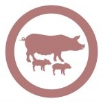Nave de cebo de cerdos, especializada en la construcción de granjas de cerdos, cebadero porcino y naves de cerdas hembras para reproducción de lechones Disponemos de un servicio que ofrece máxima cobertura al sector porcino, en las naves de cebadero de cerdos la mejor construcción de naves llaves mano para las granjas porcinas.
