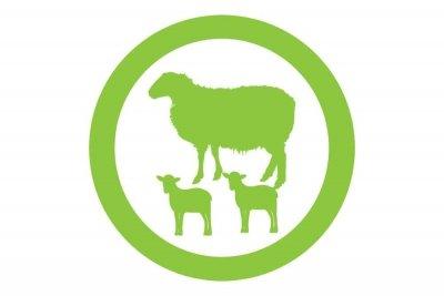 icono ovejas