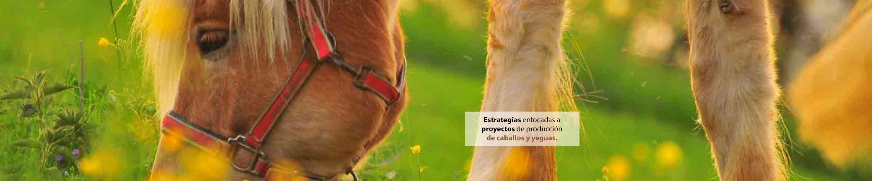 imagen de un caballo pastando
