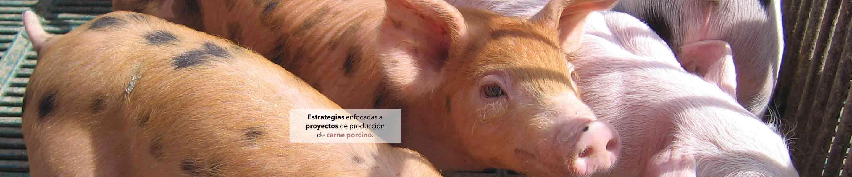 lechones en nave de reproducción de cerdos