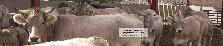 imagen de vacas