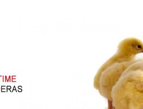 Distribuidores Chore-Time. Granjas pollos de engorde