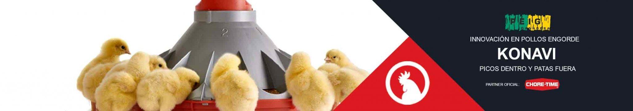 Comedero siempre limpio para pollos
