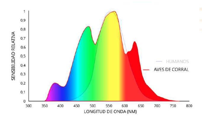 Gráfico comparativo de la longitud de onda alcanzada en aves y humanos