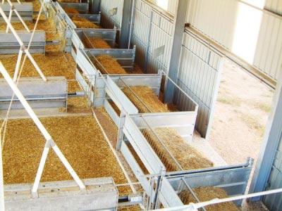 Linea de transportador de pienso en ganado ovino o caprino.