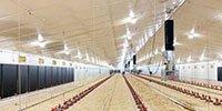 Iluminacion de granja para pollos