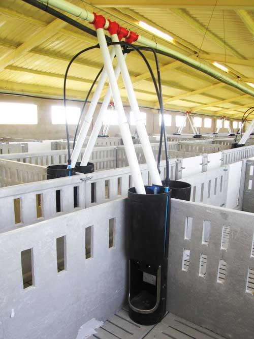 Equipamiento interior cebo porcino, reparto automático, fontanería y tolva de pienso