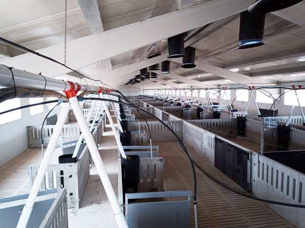 Interior de la nave de engorde porcino.