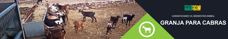 Banner página granjas de cabras